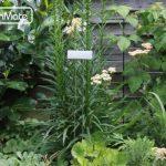 GardenMate® 25 pièces Poster XL 55 cm - etiquettes plantes jardin en métal zinc de la marque GardenMate® image 1 produit
